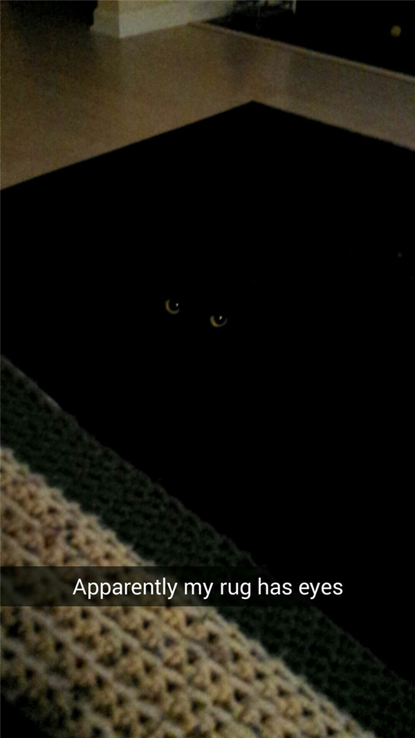 Hình như tấm thảm này có mắt.