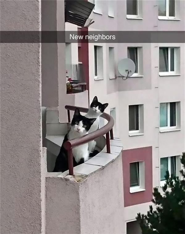 Mới dọn đến nhà mới và ngay lập tức được hàng xóm nhảy ra chào hỏi.