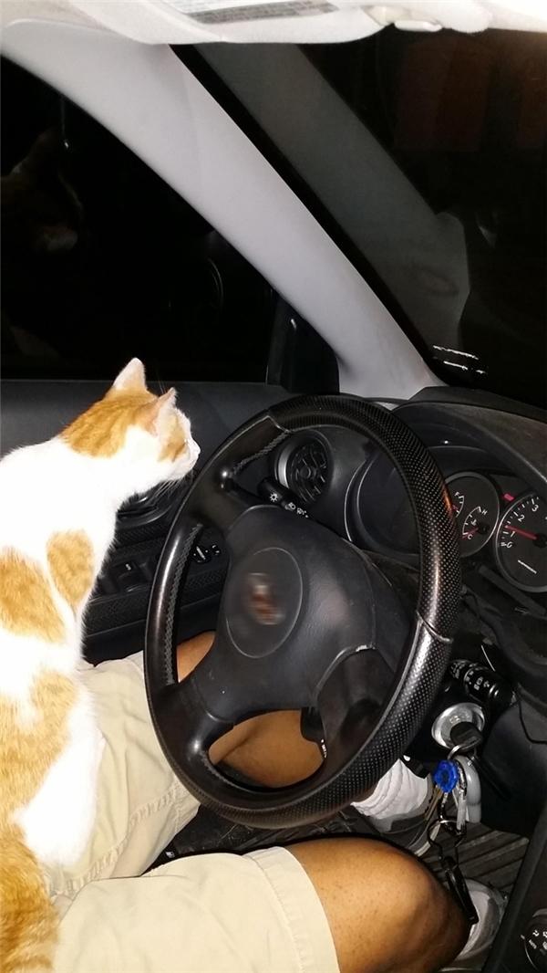 Sen đang chuẩn bị lái xe đi thì con mèo nhảy vào lòng nó và ngồi im như thế cả một buổi, đuổi hoài không đi. Mà sen nó đâu có nuôi mèo. Phải chăng đây chính là cách mà mấy con mèo vẫn xuất hiện trong đời bọn sen?