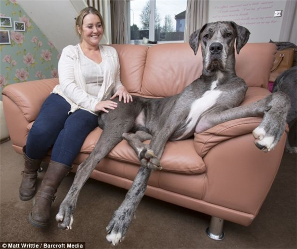 Freddy đã đánh bại Zeus trở thành chú chó cao nhất thế giới, tính ở thời điểm hiện tại.