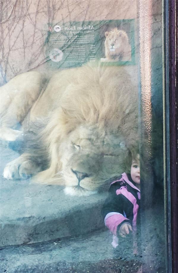 """Khổ thân cô bé """"bị nhốt"""" chung một chuồng với con thú dữ. Cẩn thận đừng la lớn kẻo nó thức giấc đấy."""