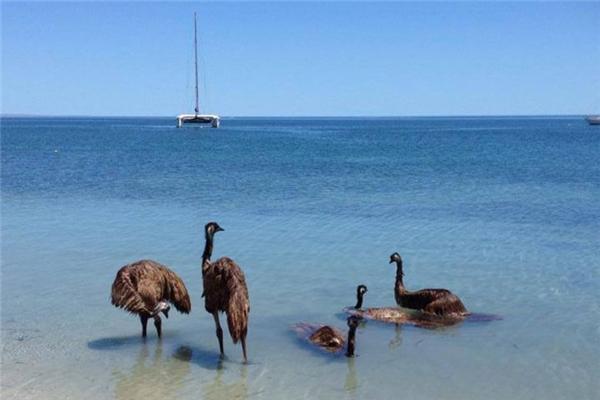 Dân Australia ai cũng yêu biển và thích tắm biển.