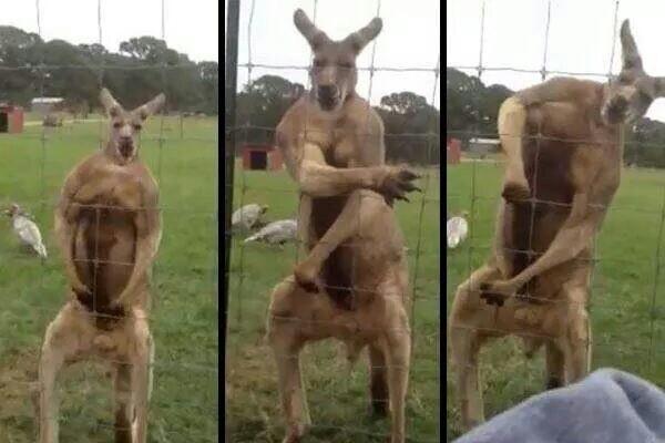 Hey yo! Chào mừng bạn đến với Australia!