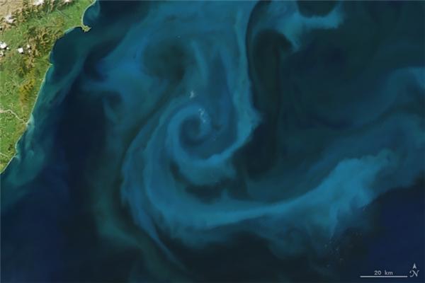 Chữ E: Một quần thể đông đúc những con phù du sinh sôi nảy nở ngoài khơi New Zealand