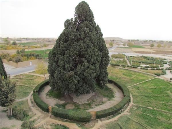 Cây Sarv-e Abarqu là một di tích lịch sử của Iran.