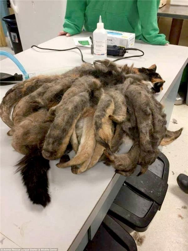 Sốc với chú mèo có bộ lông yêu quái do bị bỏ rơi