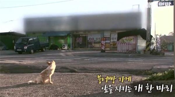 Cô chó lang thang một ngày kia xuất hiện gần một cửa hàng nhỏ.
