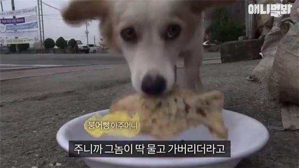 Người ta để sẵn tô thức ăn cho nó nhưng cô chó lúc nào cũng tha đồ ăn đi.
