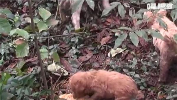 Kết quả là họ phát hiện ra một bầy chó con vô cùng đáng yêu lại rất ngoan ngoãn chờ mẹ mang đồ ăn về.
