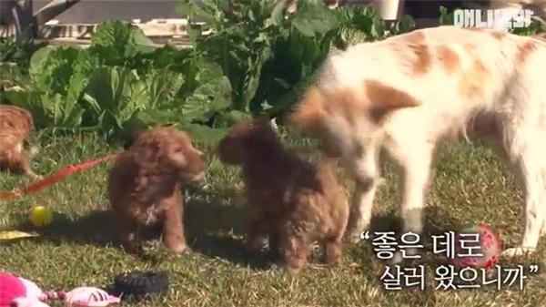 Xúc động gia đình mẹ con chó lang thang được người dân cứu giúp