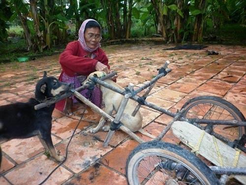 Cay mắt với câu chuyện của bà cụ Noel và cỗ xe tuần lộc ở Tây Ninh