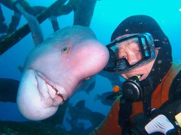 Hình ảnhông lão Hiroyuki Arakawa và con cá Yoriko.