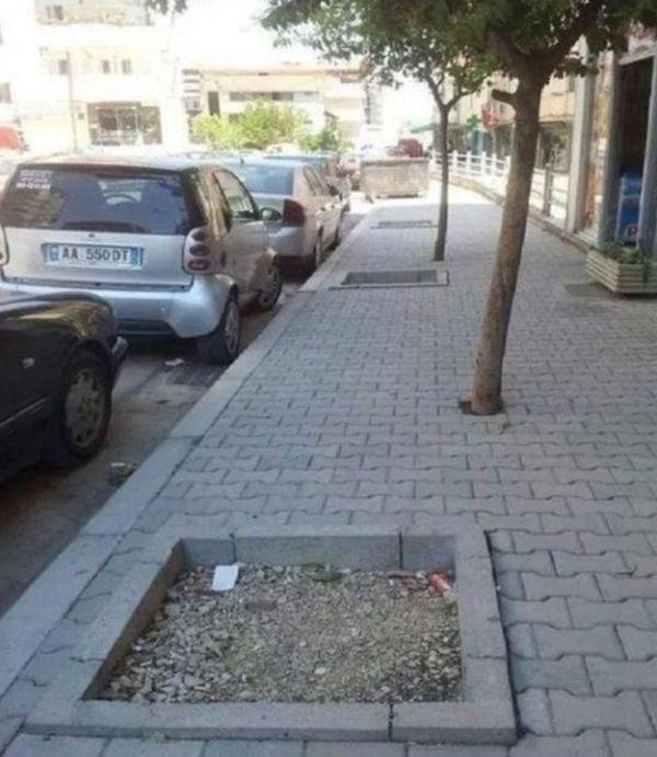 Là mấy cái cây có trước hay mấy cái bồn có trước nào?
