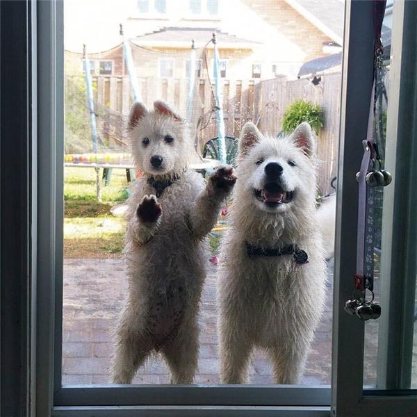 """""""Hai đứa bay đứng ngoài đó, chừng nào chưa khô thì cấm bước chân vô nhà!"""""""