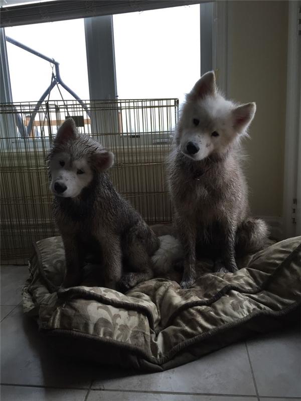 Hai ông tướng, đi nghịch bùn về chưa chịu tắm rửa mà đã tót lên giường ngồi như chưa có chuyện gì xảy ra.