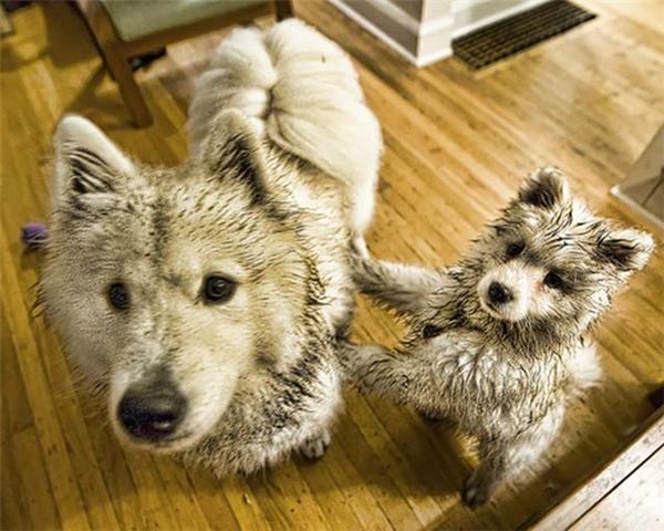 """""""Lúc nãy anh xô con vào vũng bùn như thế này này."""""""