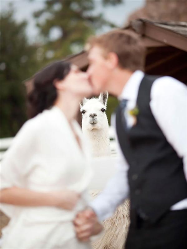 Đến chiếc máy ảnh mà nó còn nhận diện được nhân vật xinh đẹp nhất đám cưới cơ mà.