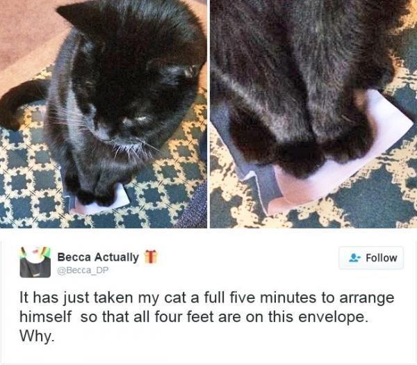 Làm thế nào mà cô mèo mun này có thể kiên nhẫn cho đủ 4 cái chân của mình nằm gọn trên phong bì nhỉ? Mất hẳn 5 phút cuộc đời, nhưng mình thích thì mình làm thôi! (Ảnh: Brightside)