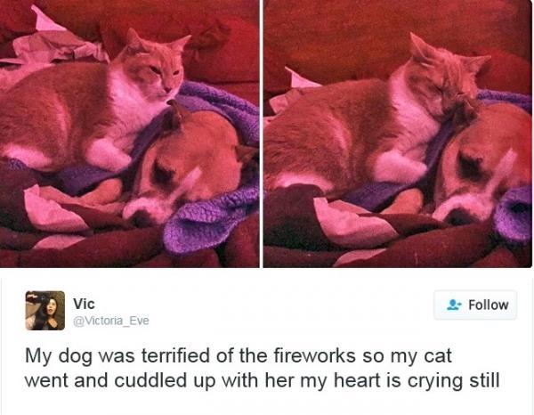 Khi những kẻ cô đơn cần được bảo vệ, thì không cần phân biệt giống loài. Cô mèo đã rất tâm lí khi trấn an tinh thần cho anh chó đang nằm co ro vì sợ pháo hoa. (Ảnh: Brightside)