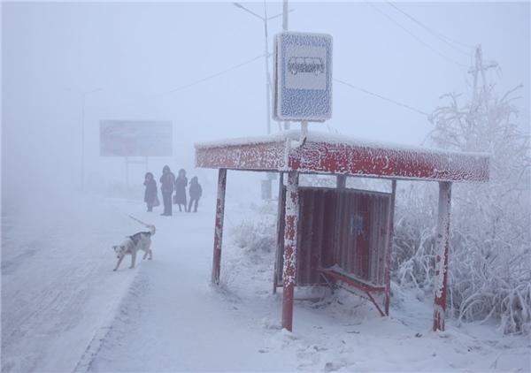 Vậy người dân ở đây đã chống chọi với cái lạnh khủng khiếp này như thế nào? Trà Russki chai là thức uống đặc sản giúp họ giữ ấm.
