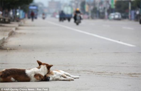 Có khi mệt mỏi, chú chó tựa lên người của bạn.