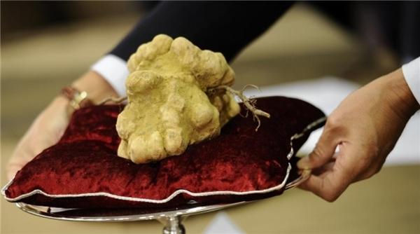Nấm Truffle được xem là vua của các loại thực phẩm với giá bán vô cùng đắt đỏ. (Ảnh: internet)