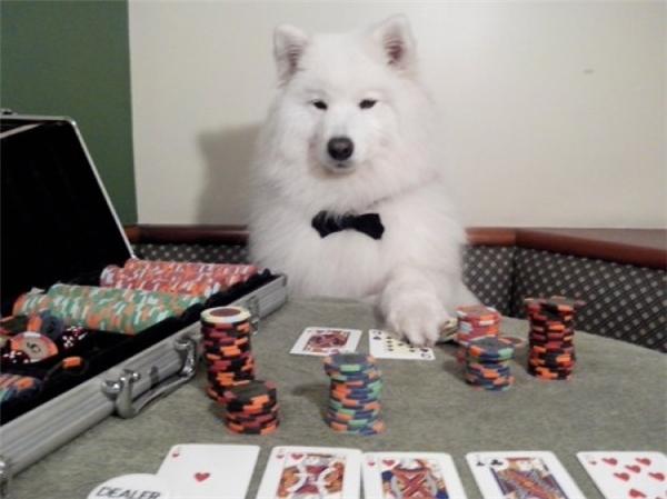 Ván này mà anh không thắng nữa thì anh làm con chó nhé.