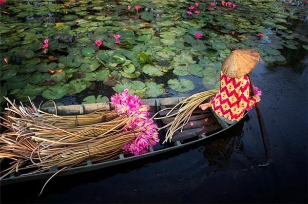 Thêm một đại diện đến từ Việt Nam được ghi lại bởi nhiếp ảnh gia Nhân Lê. Người phụ nữ trong ảnh đang thu hoạch những bông hoa súng tạivùng đất sông Mê Kông mà theo chủ nhân bức ảnh cho biết chị kiếm khoảng 10 nghìn đồng cho mỗi bó hái được.