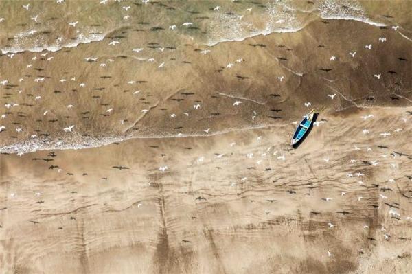 Những con mòng biển bay rợp trên bãi biển ởAlibag, Ấn Độ tạo nên khung cảnh ấn tượng với những chiếc bóng in dấu chúng lên cát. Rất nhiều người du lịch tại thị trấn thuộc vùng Maharashtra của Ấn Độ để thả mình trên các bãi biển xinh đẹp nơi đây.