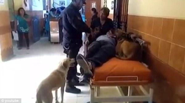 Khi ông chủ đợi khám ở hành lang bệnh viện, hai chú chó vẫn nhất quyết nằm cạnh để canh gác cho chủ nhân của mình.