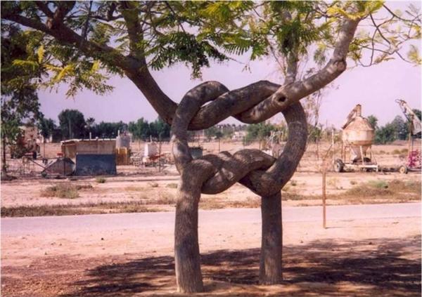 Tình yêu hiện hữu khắp mọi nơi. Đến loài cây cũng vậy.