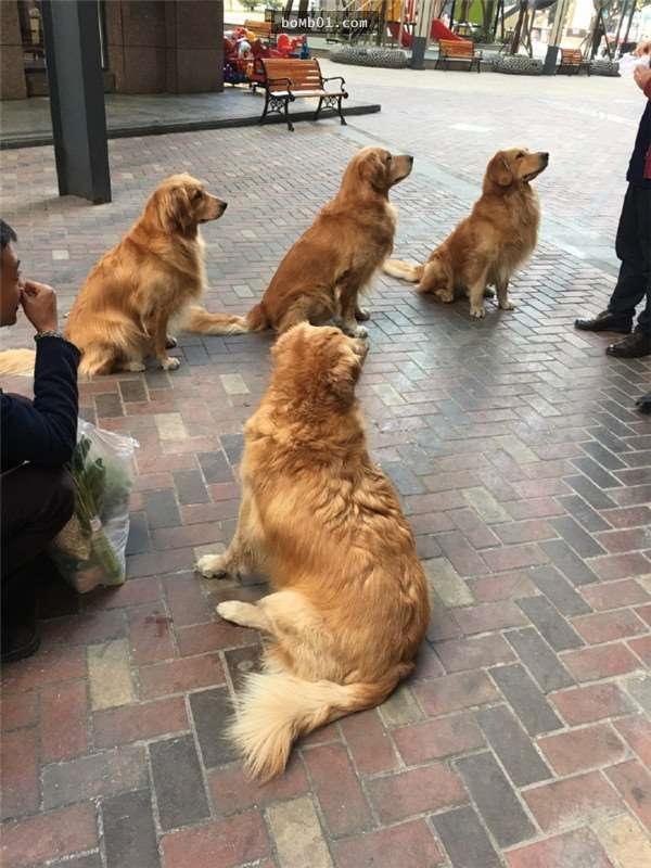 Tan chảy cảnh 4 chú chó tình cảm với loài vật không đội trời chung