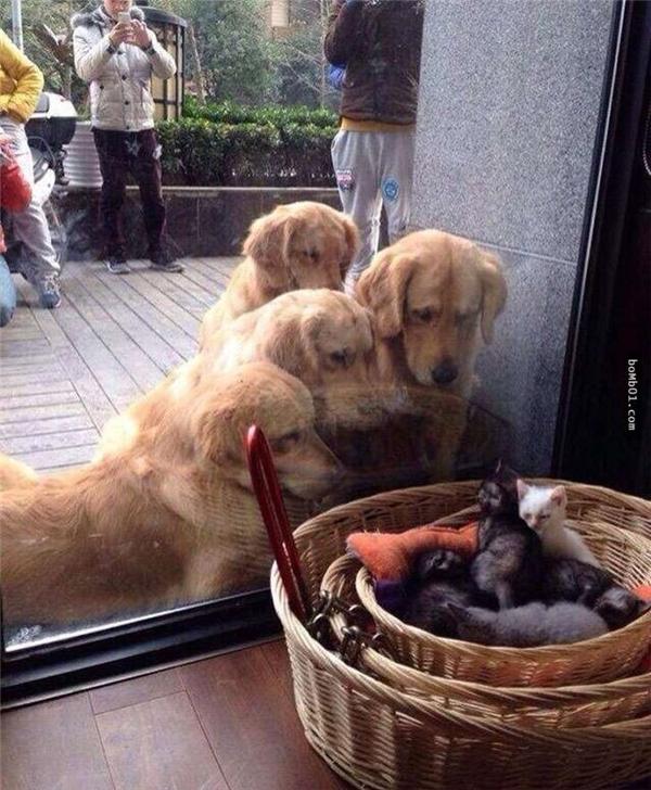 """Và """"điều đặc biệt"""" ấy đã được hé lộ. Bốn chú chó đang chăm chú nhìn những em mèo xinh xắn trong chiếc giỏ đặt ngay cạnh cửa kính."""