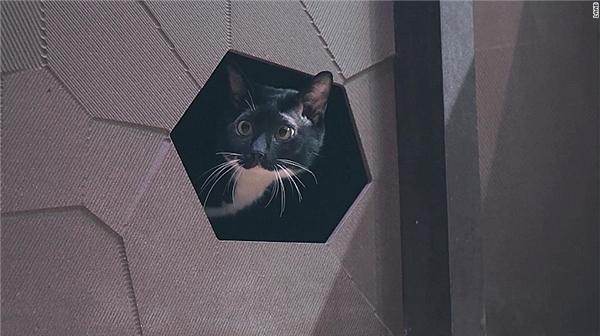 Căn hộ dành riêng cho mèo chứng tỏ… mèo sắp làm bá chủ thế giới
