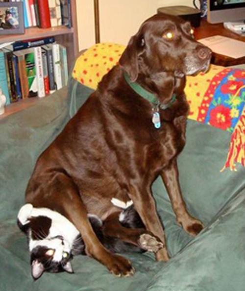 12 khoảnh khắc những chú chó giang hồ thể hiện quyền uy