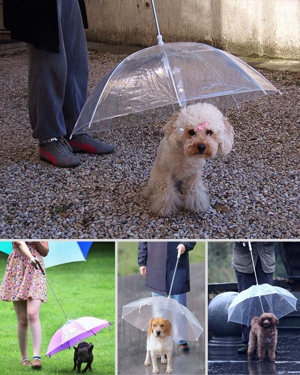 Ô dành cho chó - Đừng để cơn mưa làm hỏng bộ lông quý giácủa chú cún nhà bạn.