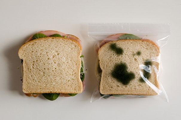 Túi đựng đồ ăn ngăn cướp giật - Thà mang tiếng chứ quyết không mất miếng ăn.