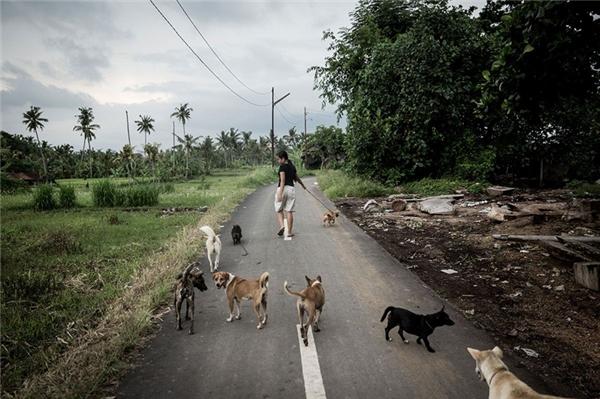 Agung dắt bầy chó cưng đi dạo.