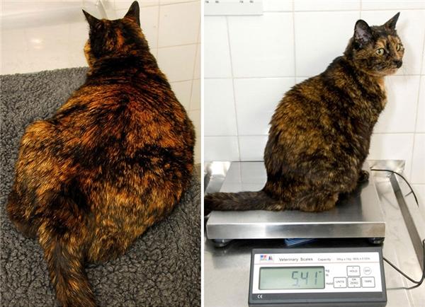 Thiếu nữ 12 tuổi Amber từng nặng đến 7,3kg nhưng hiện tại đã giảm được 17% cân nặng. Sau khi giảm cân thành công thì cô nàng cũng bớt ngủ đi và chơi nhiều hơn trước.