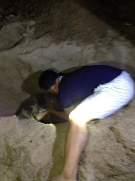 Chú hải cẩu bị đánh đến chếtkhiến không ít người xót xa. (Ảnh: Facebook)