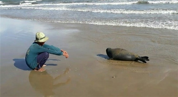 Những ngườigiết hại chú hải cẩu này có thể chịu hình phạt lên đến 3 năm tù giam?(Ảnh: Internet)