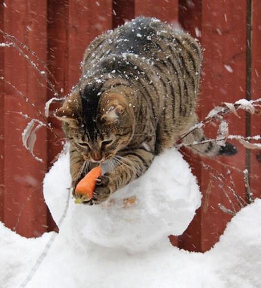 """""""Cà rốt ơi cà rốt sao mày lại ở ngoài này? Mà trông mày có vẻ """"ngon"""" nhỉ"""""""