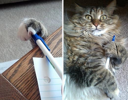 Lầy hết mức, đến cây viết cũng không tha.