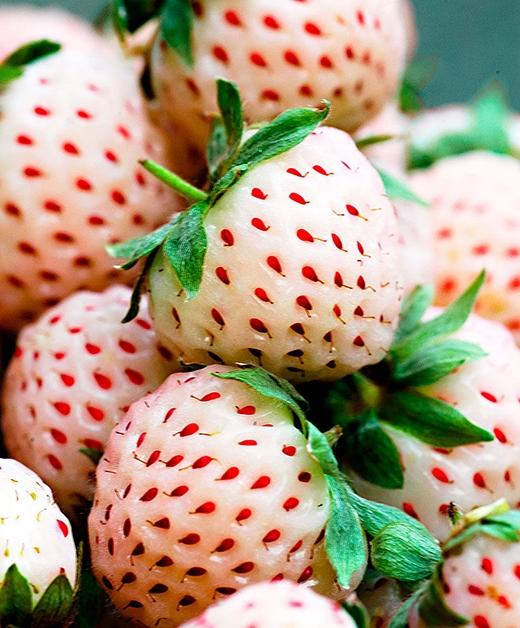 Dâu Bạch Tuyết đắt nhất thế giới chỉ là đồ ăn vặt ở Việt Nam
