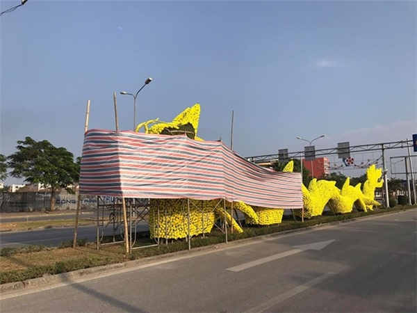 Theo quan sát vào đầu giờ chiều 8/1, 2 con rồng vàng đặt ở điểm đầu ngã tư Big C và trường chuyên Trần Phú đã được nhóm thợ của Công ty Công viên cây xanh Hải Phòng lấy bạt che kín phần đầu để tiến hành tháo gỡ hoa.