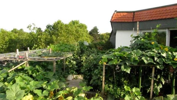 Mảnh vườn rộng hơn 100m2. (Ảnh: Internet)