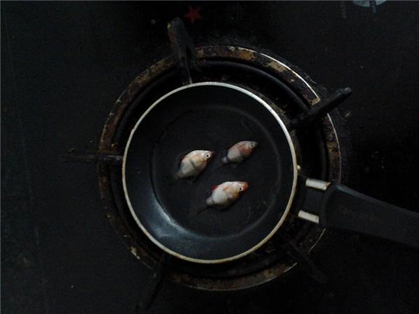 Cận cảnh 3 chú cá bị bà vợ cho lên chảo rán để hăm dọa anh chồng.(Ảnh: Chụp màn hình)