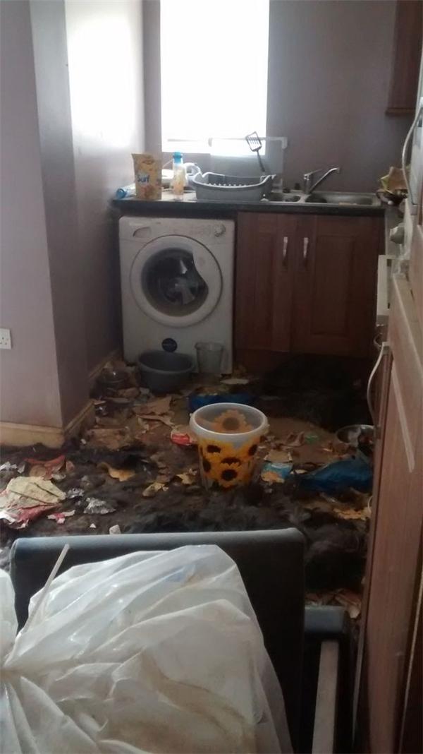 Xác hai chú chó tội nghiệp chết trong nhà bếp.(Ảnh: Mirror)