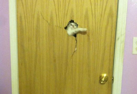 Prison break phiên bản mèo