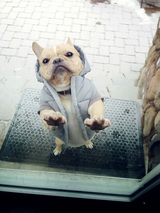 Mặc dù đã mặc áo ấm nhưng mà chỉ thích vào trong nhà thôi! Ngoài này lạnh lẽo lắm cơ!